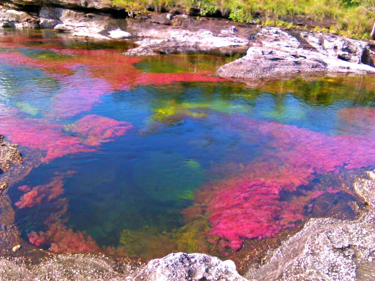 Cano cristales colombia tours macarena meta rainbow river llanos colombian (10)