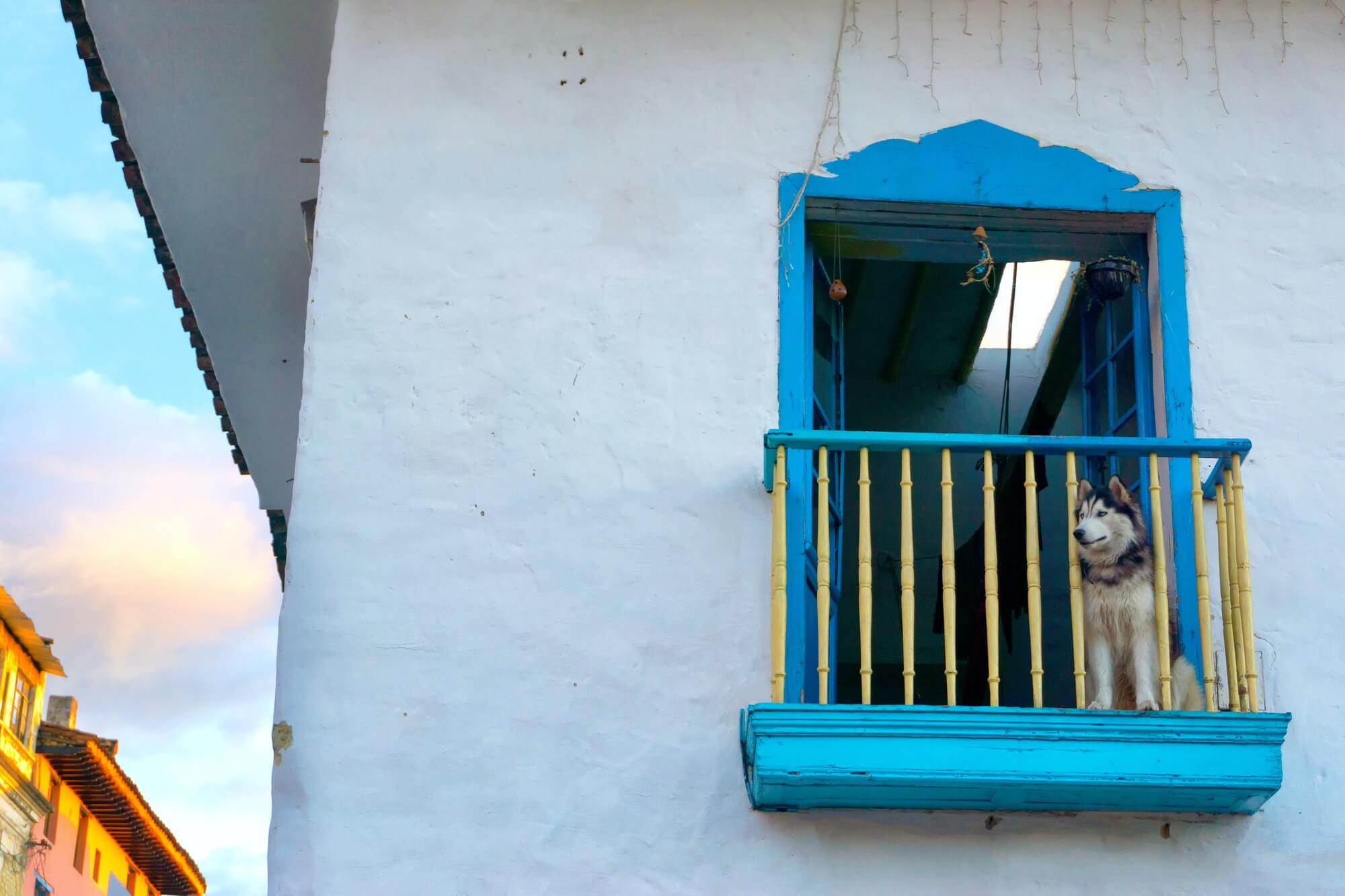 Dog on a Colonial Balcony